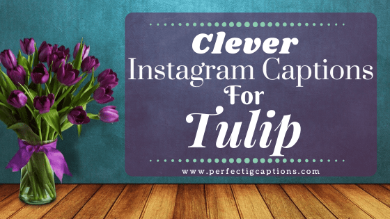 Clever-Instagram-Captions-For-Tulip