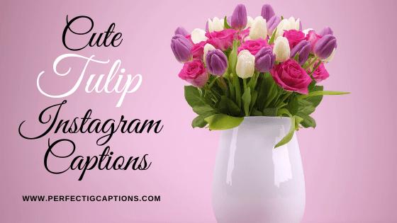 Cute-Tulip-Instagram-Captions