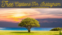 Natural 71+Tree Captions For Instagram